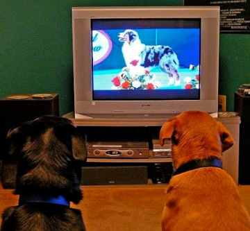dogs-watch-tv-krossbow-flickr