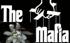 Magnolia-mafia2