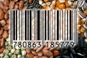 seeds-300x199